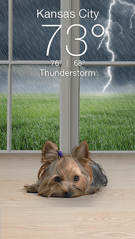 Weather Puppy Screenshot 2